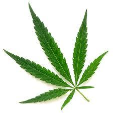 Cannabis - alt text