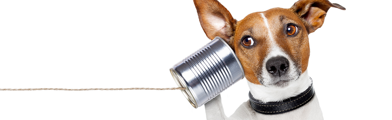 A dog listening to a tin can communicator